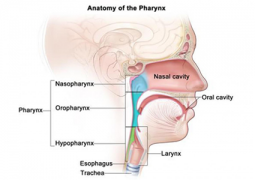Causes Of Oropharyngeal Cancer