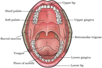Oral-Cavity-or-Buccal-Cavity