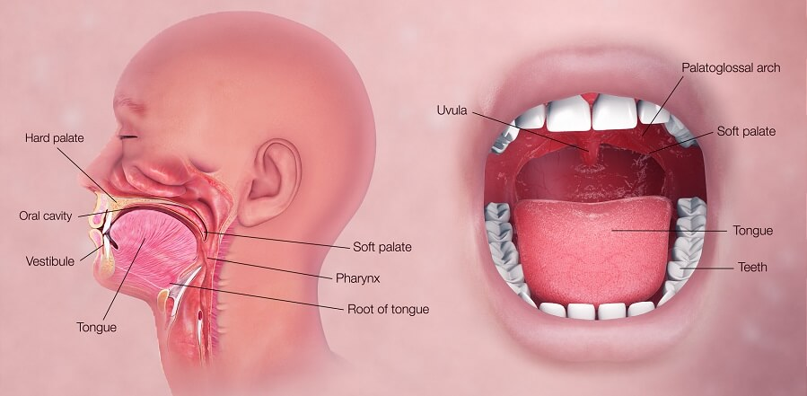 importance of maintaining oral health